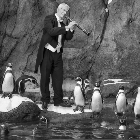 Musicians with penguins- Editorial - HarderLee