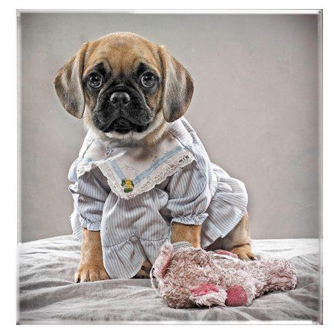 Puggles - personal - harderlee