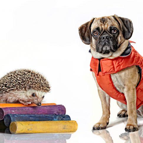 hedgehog dog - commercial - harderlee