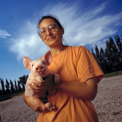 Pig Farming - Portrait - Harderlee