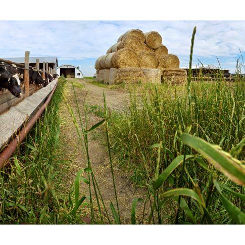 Berend Dairy Farm - editorial - harderlee